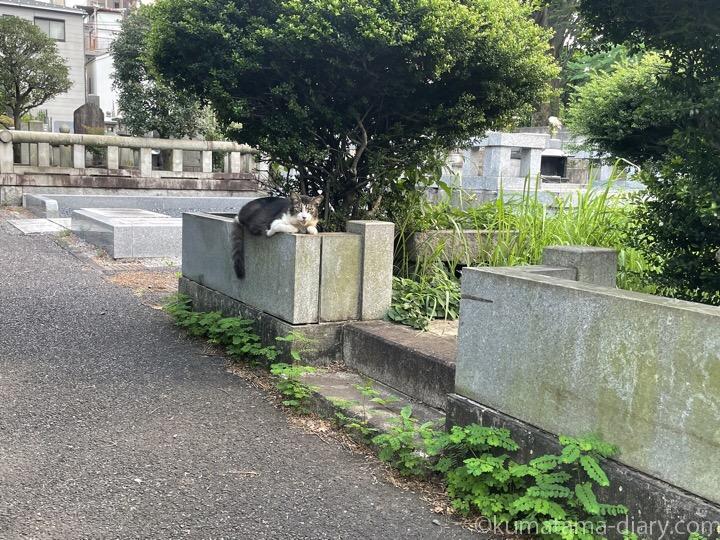 墓地猫さん