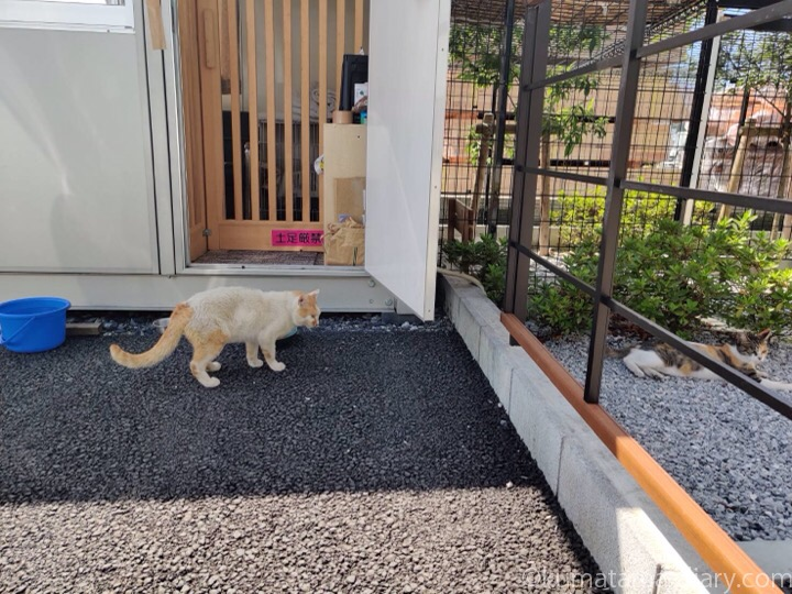 猫専用ハウスの外猫さん