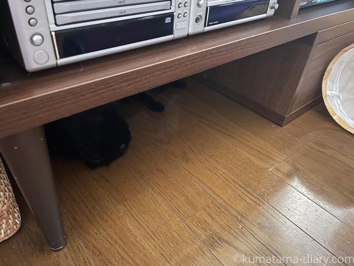 テレビ台の下のふみお