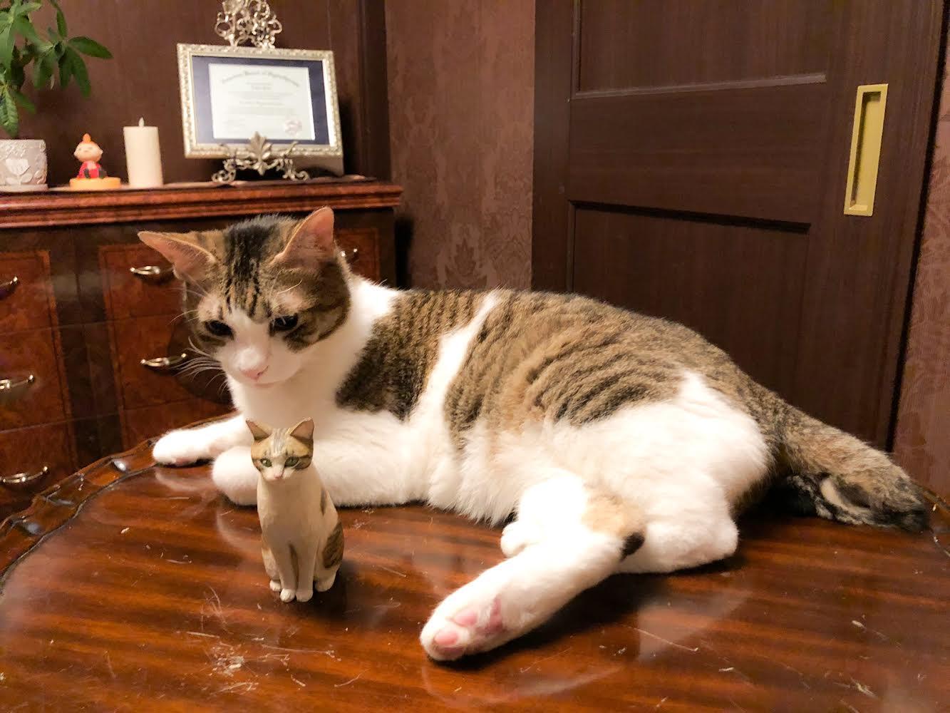 木彫り猫とシュクレくん