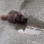 水たまりの水を飲む猫さん