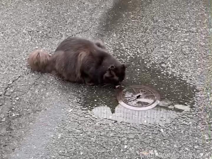 水を飲む黒猫さん