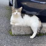 車止めブロックの上でくつろぐ猫さん