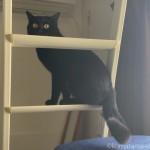 慎重な猫がロフトに上がるまで
