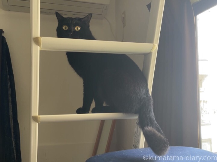 はしごのふみお