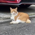 赤い車の前にいた茶トラ白猫さん