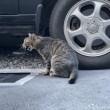 鳴いていたキジトラ猫さん