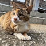 小柄で可愛らしい三毛猫さん