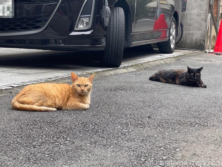 茶トラ猫さんとサビ猫さん