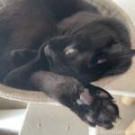 足を上に向けてハンモックで寝る猫