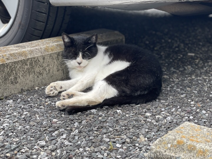 眠る黒白猫さん